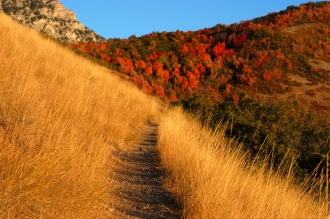 Autumn_mountain_trail